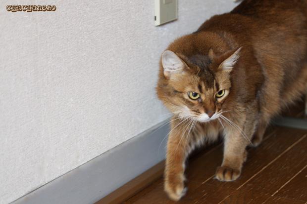 2010_01_30_3.jpg