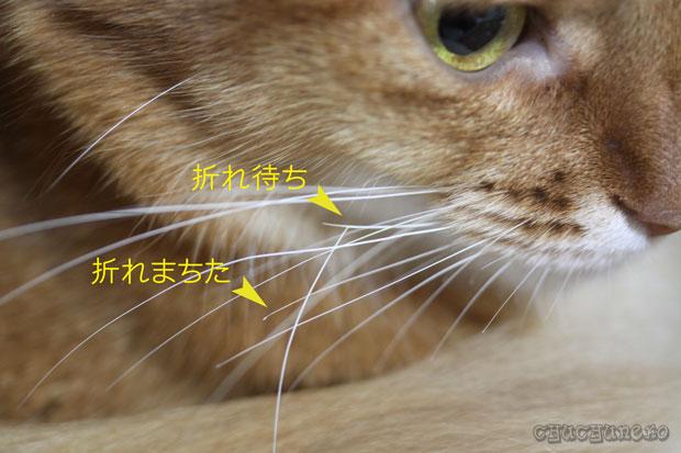 2010_02_11_5.jpg