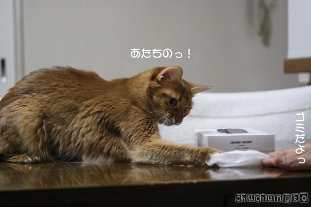 2010_03_15_1.jpg