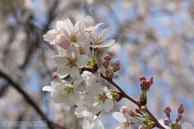2010_04_04_1.jpg