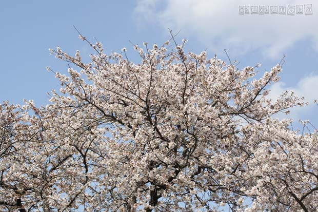 2010_04_04_2.jpg