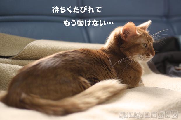 2010_04_27_3.jpg
