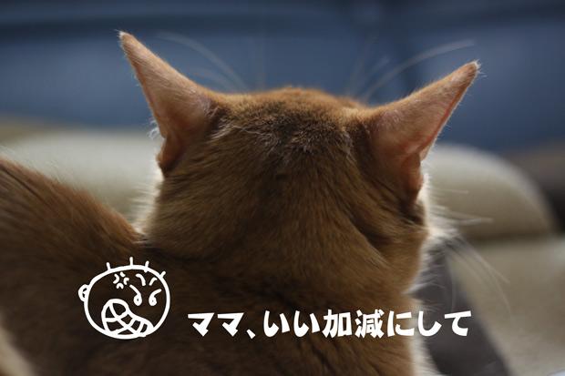 2010_04_27_5.jpg