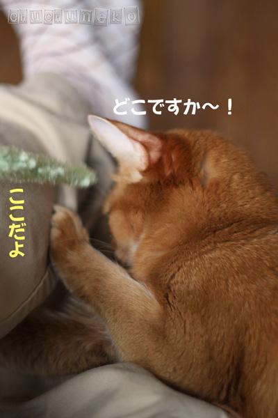 2010_05_03_333.jpg