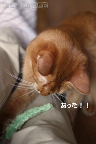 2010_05_03_4.jpg