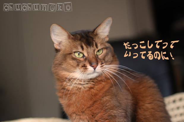 2010_05_06_2.jpg
