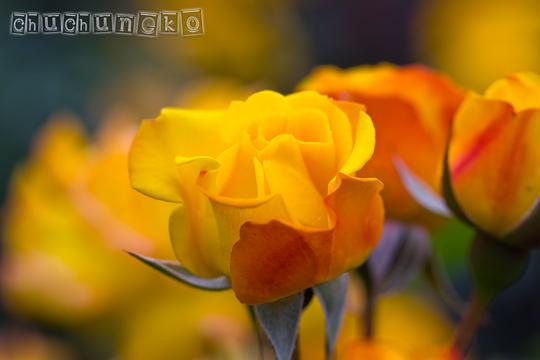 2010_06_01_23.jpg