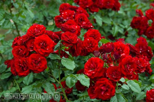 2010_06_01_24.jpg