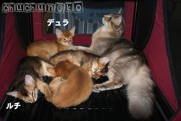 2010_07_29_6.jpg