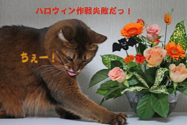 2010_10_30_2.jpg