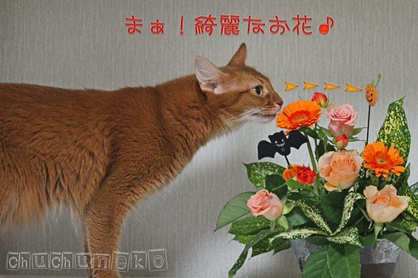 2010_10_31_3.jpg
