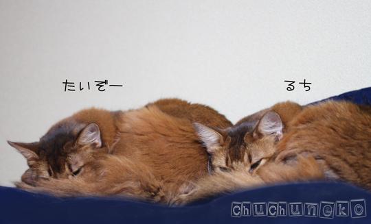 2010_11_05_1.jpg