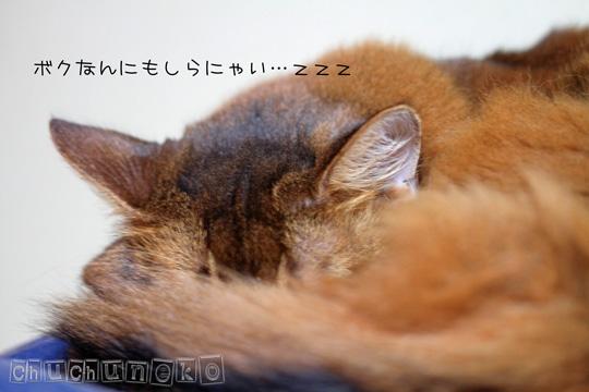 2010_11_05_2.jpg