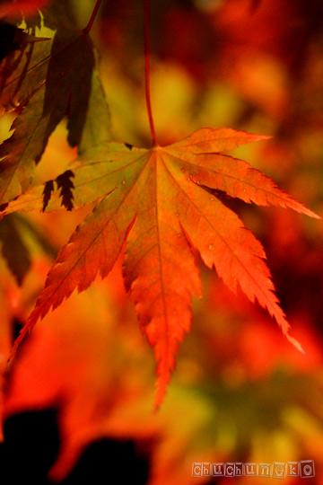 2010_11_14_10.jpg