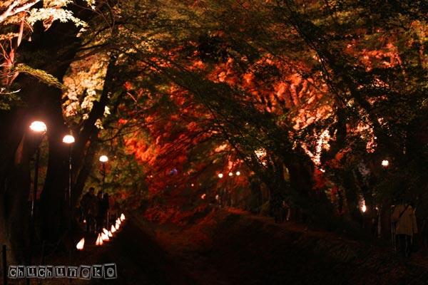 2010_11_14_11.jpg