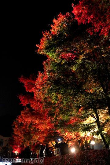 2010_11_14_2.jpg