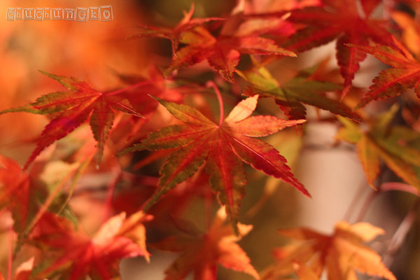 2010_11_14_5.jpg