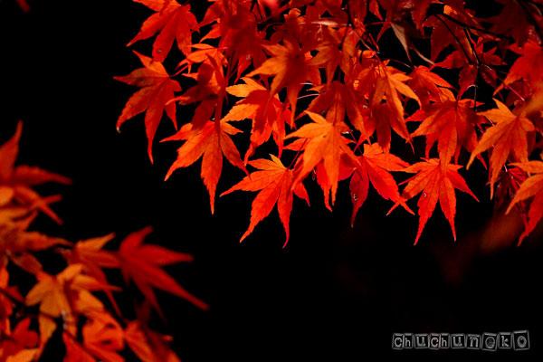 2010_11_14_8.jpg