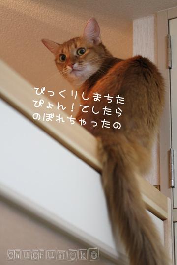 2010_11_21_1.jpg
