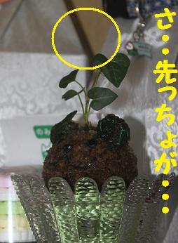 211006植物5