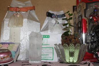 211006植物2
