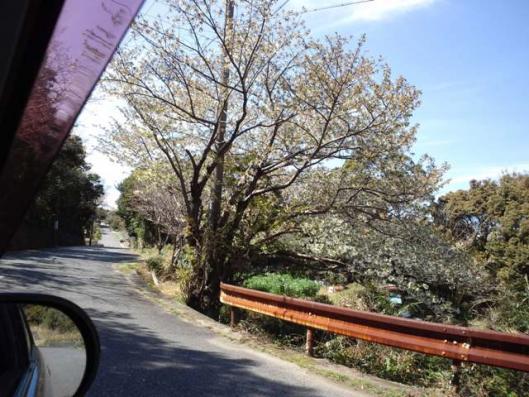 3月28日 通勤峠 桜