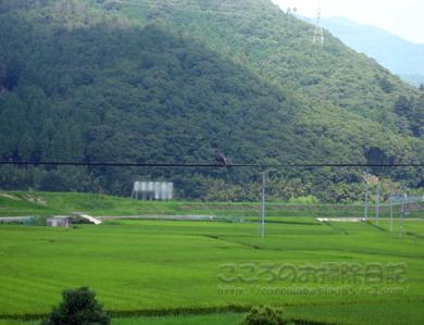 電車から田園