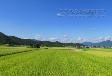稲穂と空と山