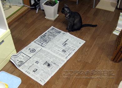 新聞とリブ