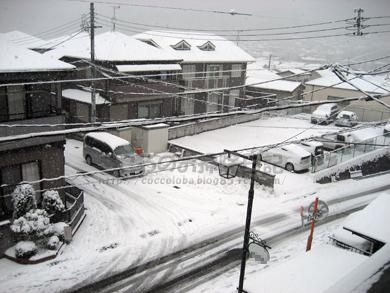 雪!1231