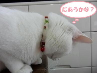 チャーミィちゃん1