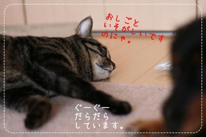 5_20100828143119.jpg