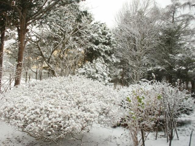雪ココざわ 028