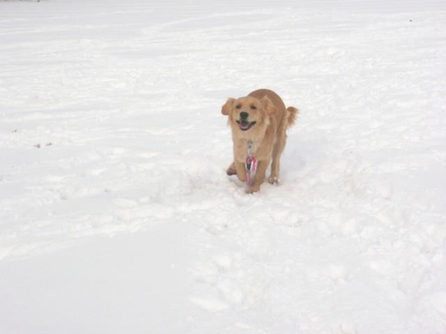 雪 12.23 040