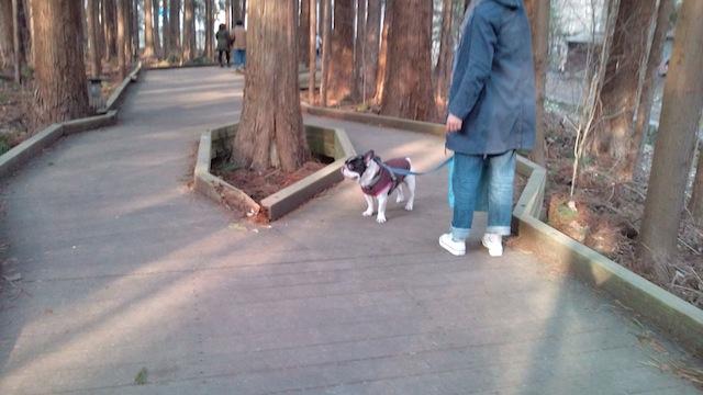 円山公園遊歩道4