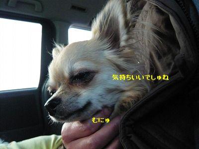 P1080868.jpg