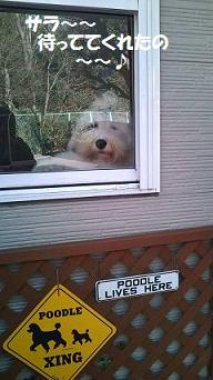 窓辺のサラ