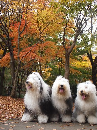 四季の森公園 紅葉