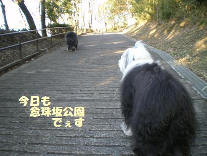 やっぱり念珠坂公園です