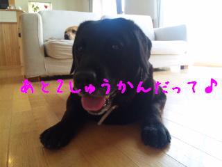 DVC00004_20110711141310.jpg
