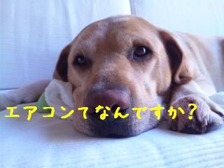 DVC00005_20110711141310.jpg