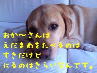 DVC00006_20110712144901.jpg