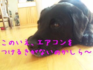 DVC00008_20110711141310.jpg