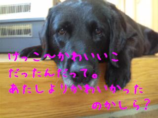 DVC00226_20110706140910.jpg