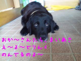 DVC00237_20110713134545.jpg