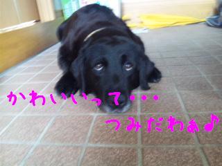 DVC00237_20110714105644.jpg