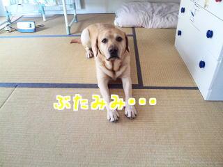 DVC00402_20110625110341.jpg