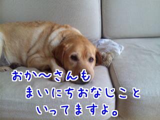 DVC00444_20110723091100.jpg