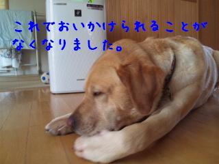 DVC00450_20110724142039.jpg