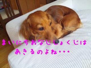DVC00472_20110901142257.jpg